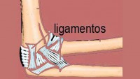 ligamentos-codo-sintomas-causas-tratamiento