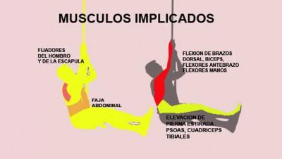 musculos-implicados-la-trepa-por-cuerda