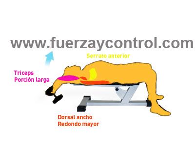 Músculos implicados en el ejercicio de fortalecimiento llamado pullover