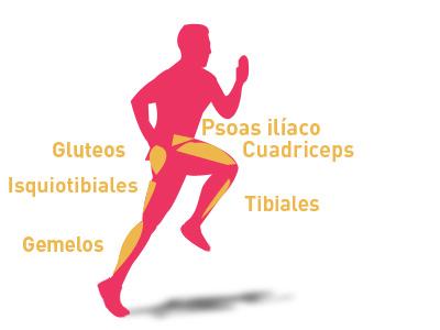 Los músculos que intervienen en el skipping