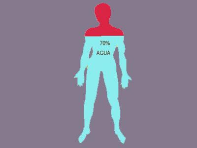 deshidratación. Esquema de la composición corporal de agua