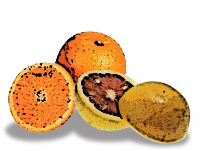 La vitamina C (I): ¿Para que sirve y donde podemos conseguirla?