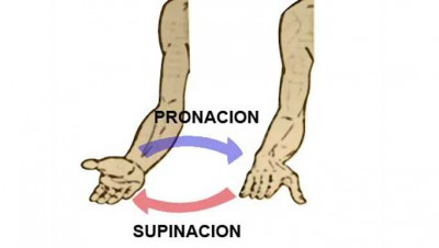 pronacion-supinacion-la-anatomia-en-el-entrenamiento-del-biceps