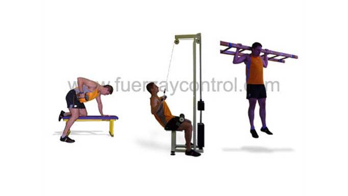 El entrenamiento del bíceps: Ejercicios y metodología