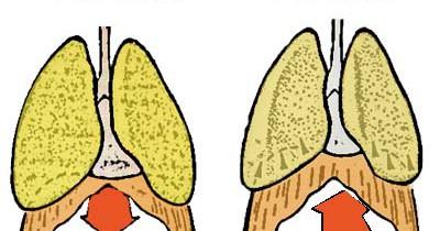Trabajo del diafragma en la respiración