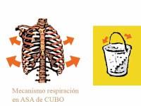 Mecanismo respiratorio del asa de cubo