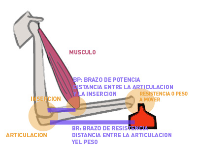 Los brazos de resistencia y potencia en las palancas de fuerza