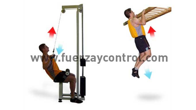 La fuerza en relación al peso corporal: Fuerza absoluta y fuerza relativa