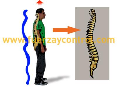 La importancia de las curvas en las postura humana