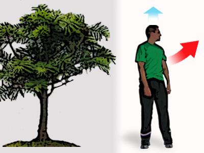 ¿Cómo conseguir el alargamiento de la columna vertebral para una mejor movilidad tronco?