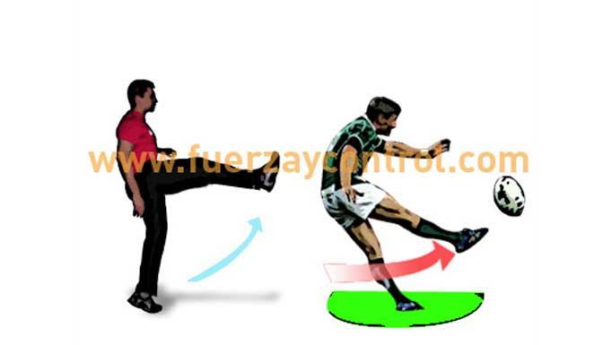 ¿Qué influencia tiene la flexibilidad muscular en la prevención de lesiones musculares?