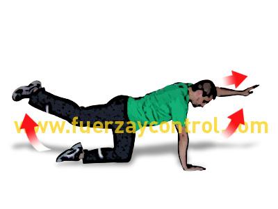 Fortalecimiento y coordinación de la espalda en cuadrupedia
