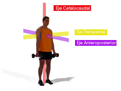 Los ejes corporales nos permiten ubicar los planos de movimiento
