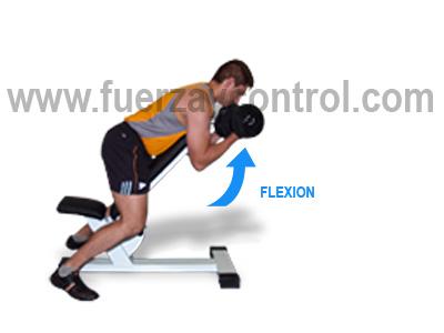 Sistematización del movimiento: El movimiento de flexión y de extensión