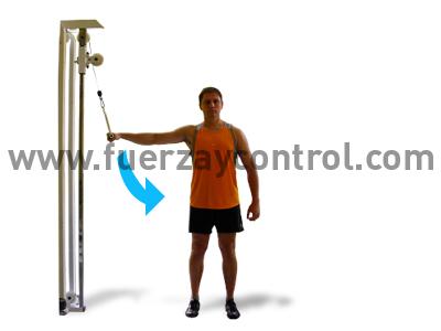 El movimiento de aducción del brazo realizado con polea