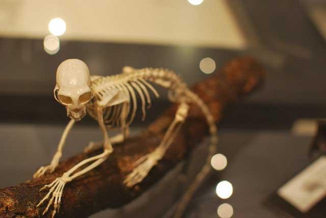 El esqueleto humano: El bastidor humano y sus funciones
